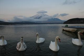 1月8日早朝の湖畔から.jpg
