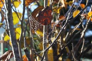 クモの巣1.jpg