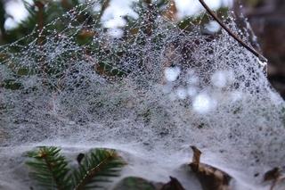 クモの巣3.jpg