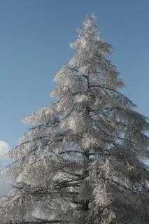 雨氷11.jpg