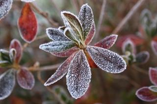 霜に凍る1.jpg