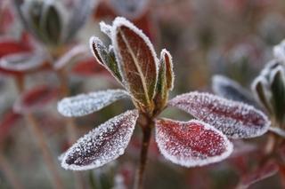 霜に凍る2.jpg