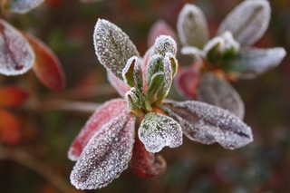 霜に凍る3.jpg