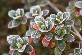 霜に凍る4.jpg