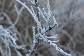 霧氷3.jpg