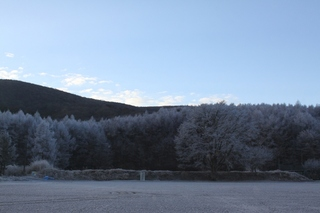 霧氷5.jpg