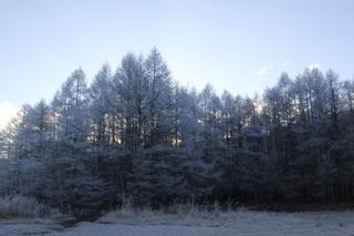 霧氷6.jpg